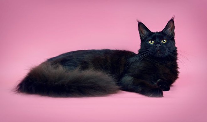 кошка питомника