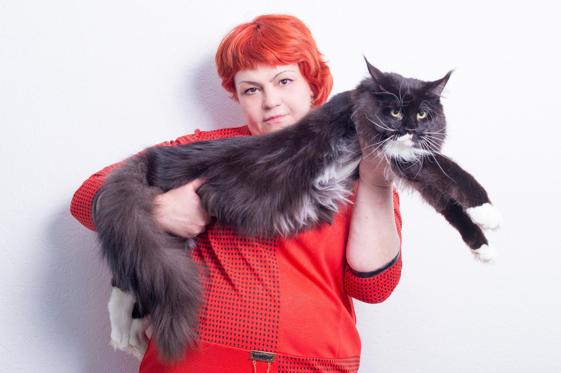 Купить котенка мейн кун в питомнике